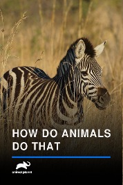 How Do Animals Do That
