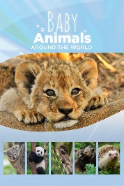 Baby Animals Around The World S3