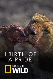 Birth of A Pride