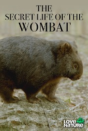 Secret Life of the Wombat S1