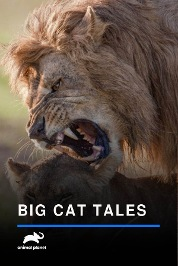 Big Cat Tales