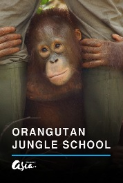 Orangutan Jungle School S2