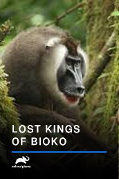 Lost Kings Of Bioko