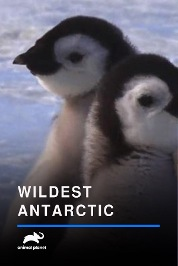 Wildest Antarctic