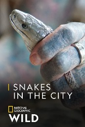 Snakes in the City S6