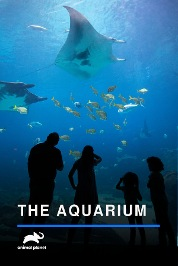 The Aquarium S2