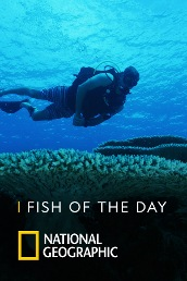 Fish of The Day S4