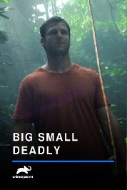 Big, Small & Deadly S1