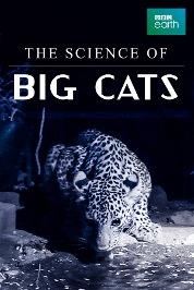 Big Cats: The Science of E1