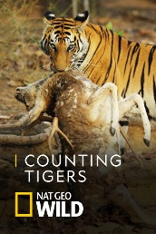 Counting Tigers