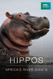 Hippos: Africa's River Giants E1