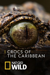 Crocs of The Caribbean
