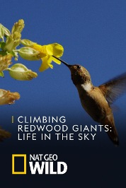 Climbing Redwood Giants: Life In The Sky