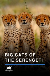 Big Cats Of The Serengeti