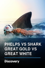 Phelps Vs Shark: Great Gold VS Great White