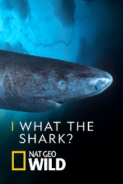 What The Shark?