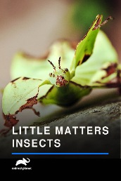 Little Matters:Insects